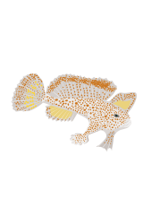 Spotted Handfish