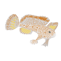 Spotted Handfish​