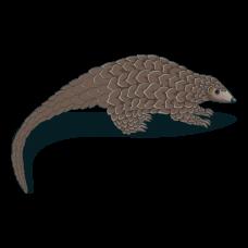 Sunda Pangolin