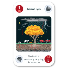 Nutrient Cycle​
