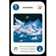 Arctic Fauna