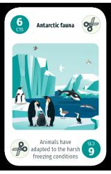 Antarctic Fauna