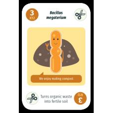 Bacillus megaterium